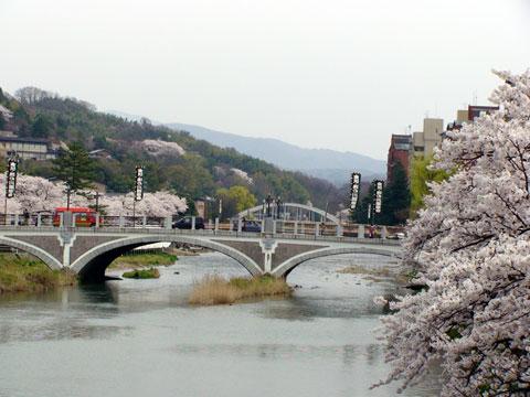 浅野川沿いの桜