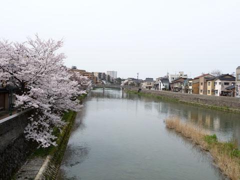 春の浅野川大橋から見た浅野川