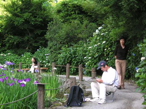 卯辰山にある花菖蒲園