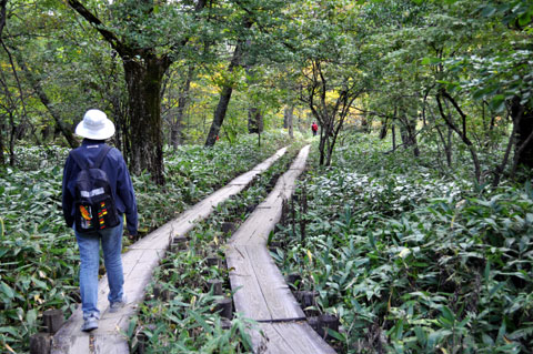 林間を歩くコース