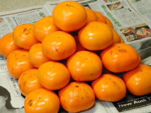 かほく市大海地区特産の紋平柿です当店の畑にある木から収穫しました