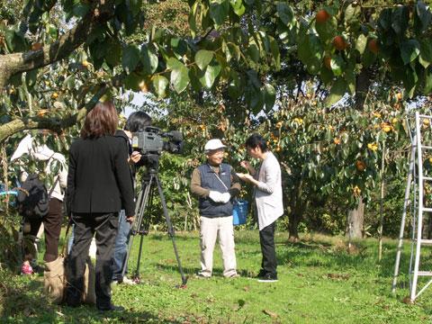 紋平柿を試食するインタビューアと城村さんの撮影風景 クリックして下さい