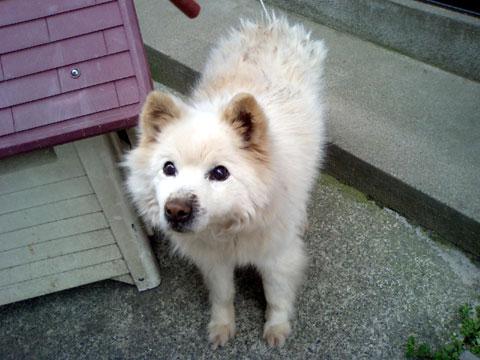 名前は『らんらん』、可愛い愛犬です