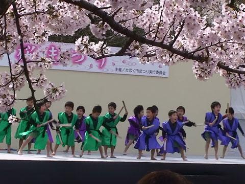 sakura-festa4.jpg