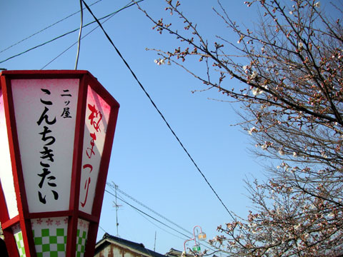 現在はまだ2~3分咲きの桜と当店の『ぼんぼり』です
