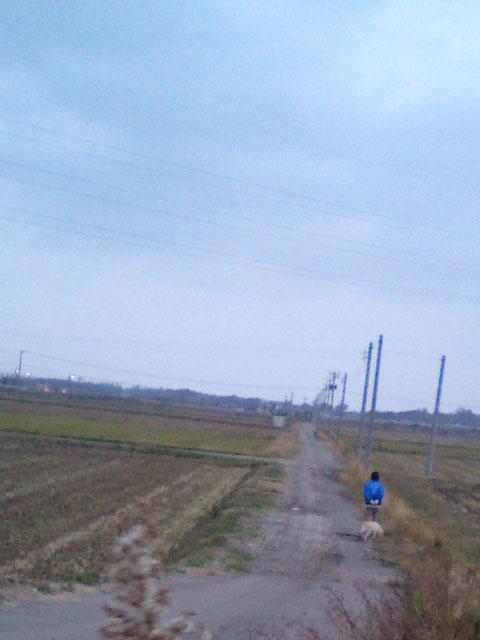 秋風が冷たいです。 夕方のたんぼ道