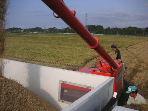 機械内の籾を車に積み込みます