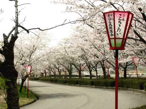 かほく市にある桜で有名な山田運動公園