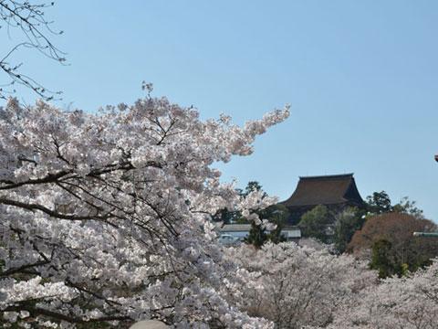桜越しに見る金峯山寺の蔵王堂