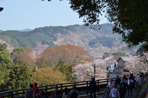金峯山寺から桜を望む