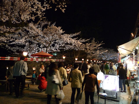 広大な兼六園、桜も人も満開でした