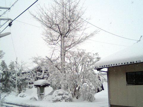 自宅斜め向かいにある浄善寺さんの境内1月25日