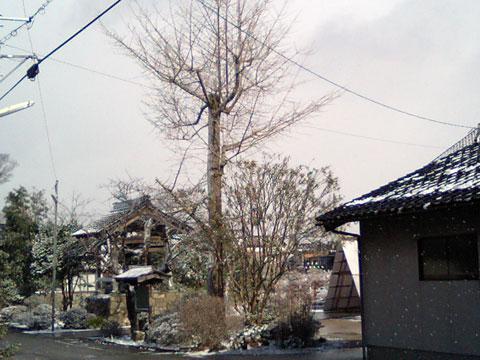 自宅斜め向かいにある浄善寺さんの境内1月24日